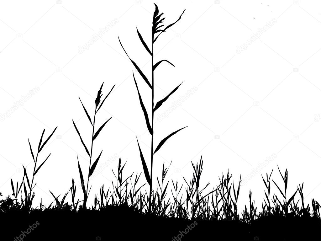Silhouette of the reed
