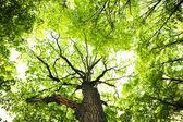 foglie di albero