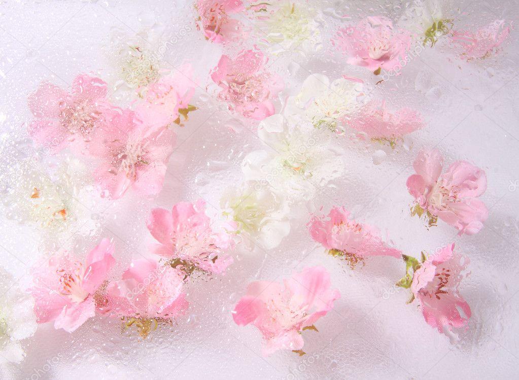 download live wallpaper pink roses