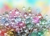 Fotografie kapky vody