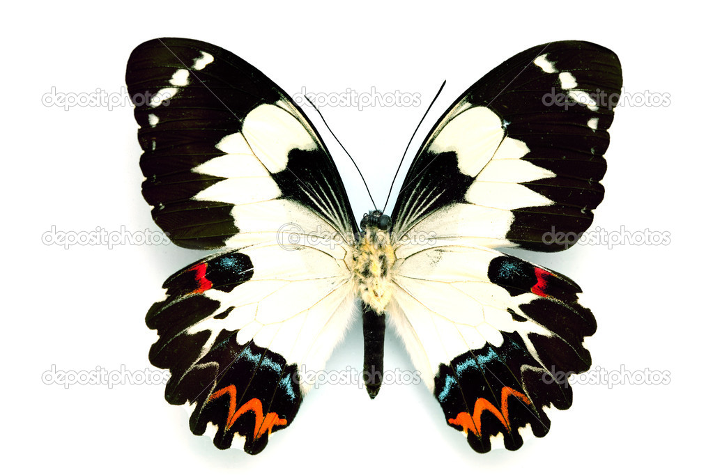 Butterfly series - Rare Beautiful Butter