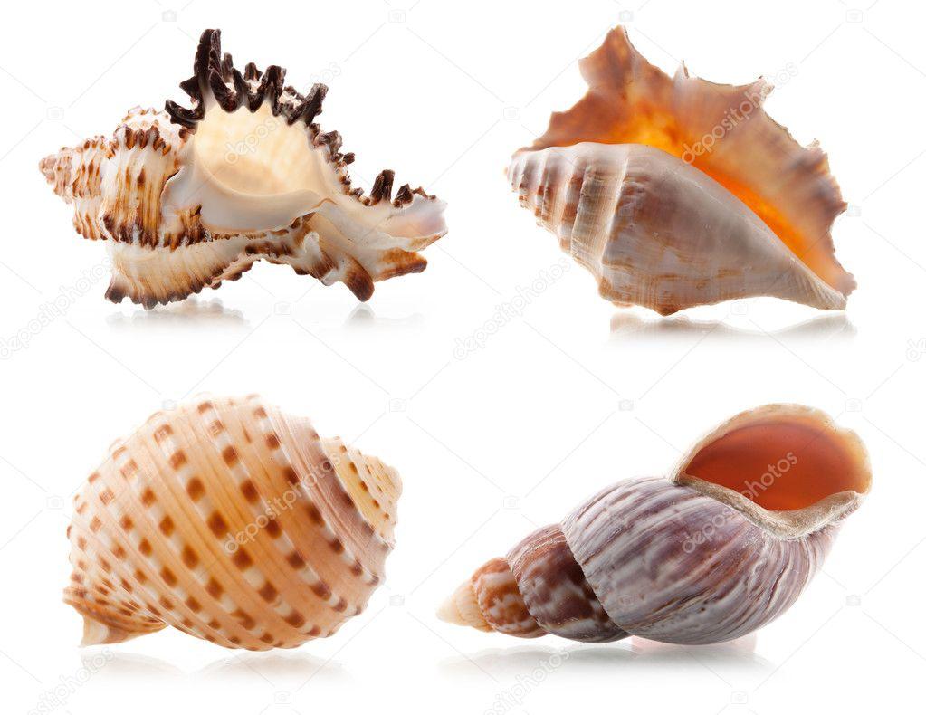 Four sea shells