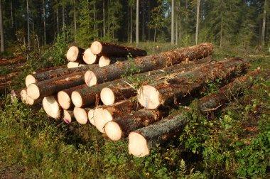 Logging site