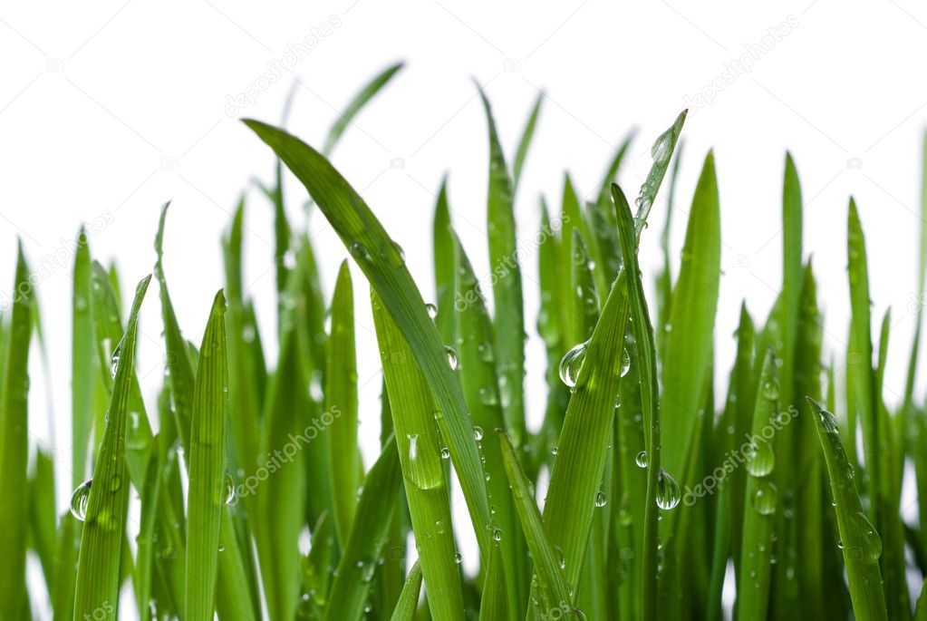 Grass with large dew drops