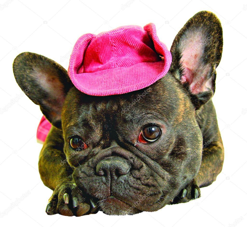 52e633fb7305f Perro con sombrero de vaquero Rosa aislado en blanco - sombreros vaqueros  para perros — Foto de ...