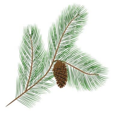 Pine cone with pine needles