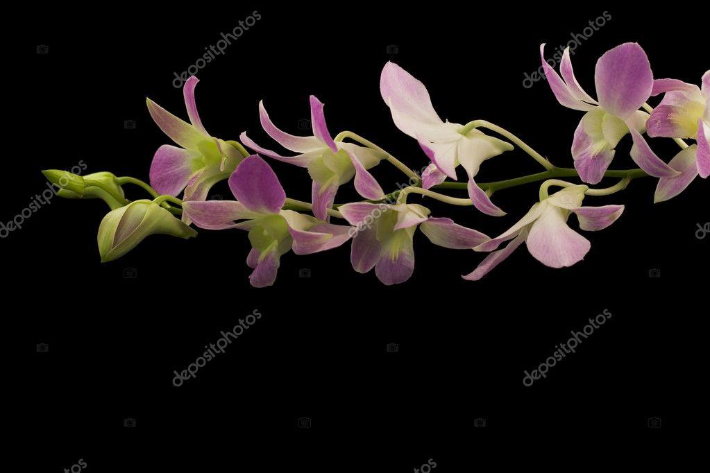 Beautiful purple orchids