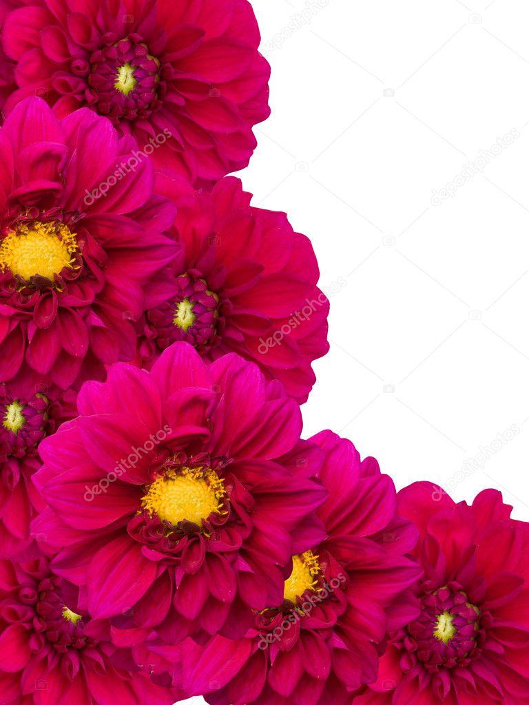 Flowers peonies ornament