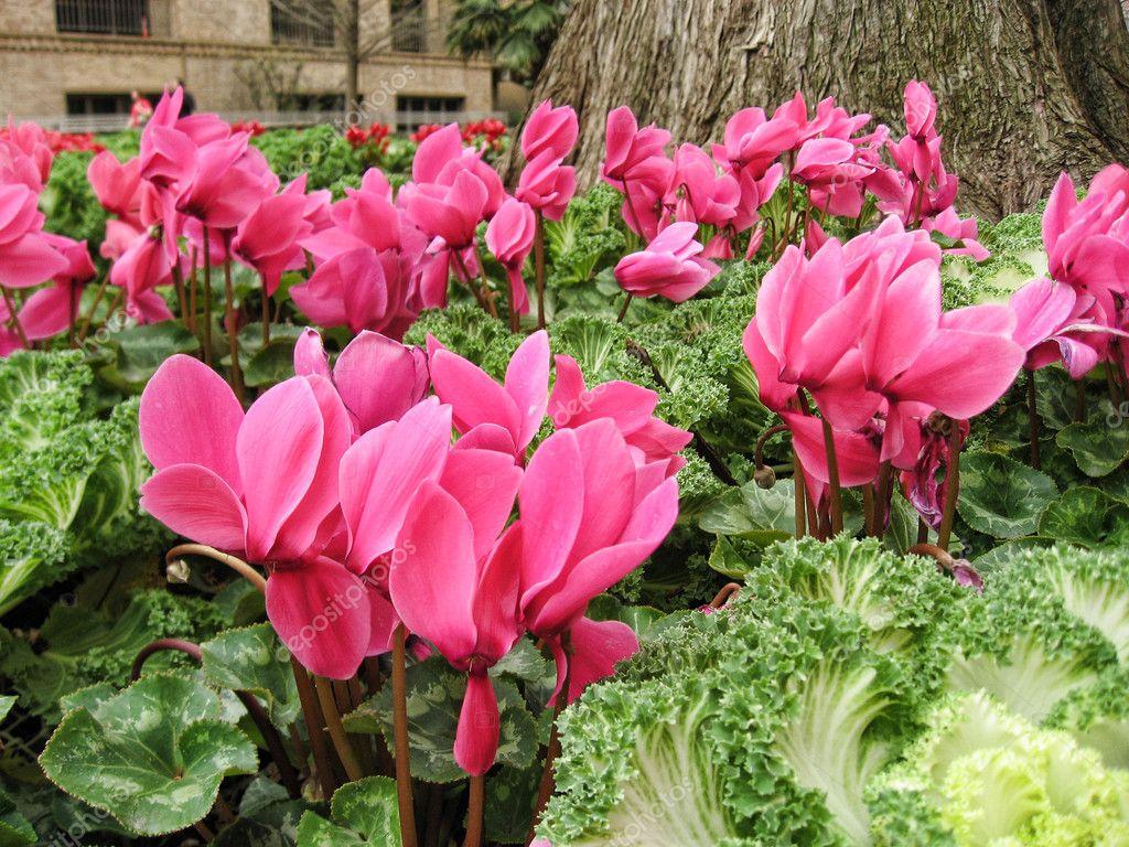 Flowers in San Antonio, Texas — Stock Photo © jovannig #1389167