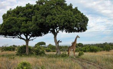 Detail of Kenya, Africa
