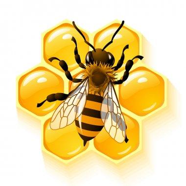 Bee and honeycombs