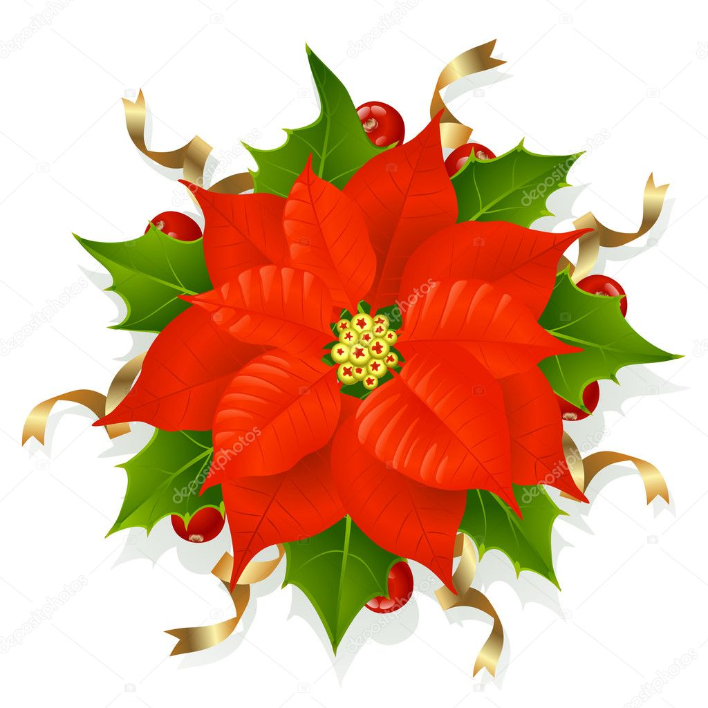 christmas flower  stock vector © denis, Beautiful flower