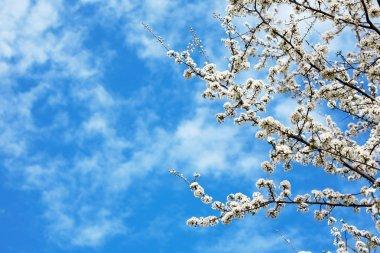 Springtime flowers