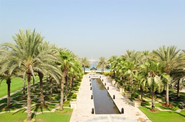 Palm trees area of luxurious hotel