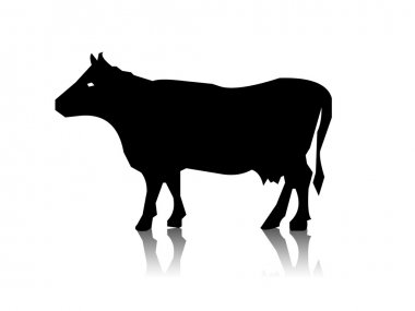 Silhouette of the cow