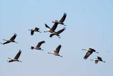 """Картина, постер, плакат, фотообои """"миграция птиц """", артикул 1269455"""