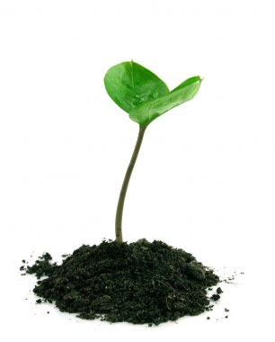 A sprout in a ground isolated