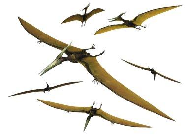 Pterodactyl Set
