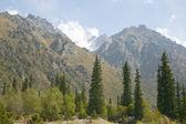 horské údolí