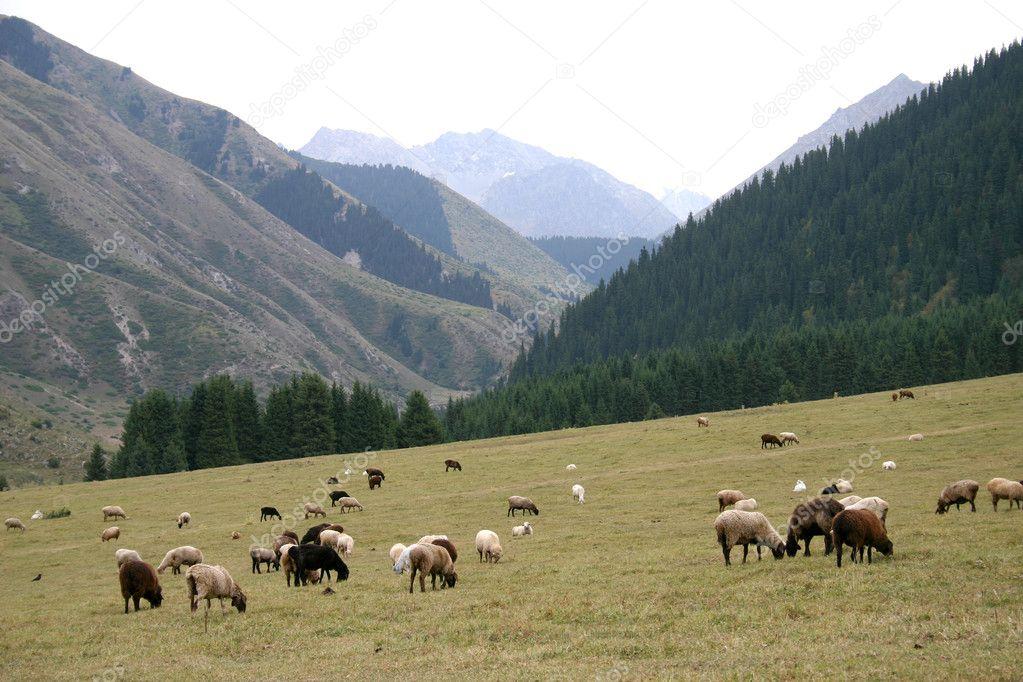 Mountain pastures.