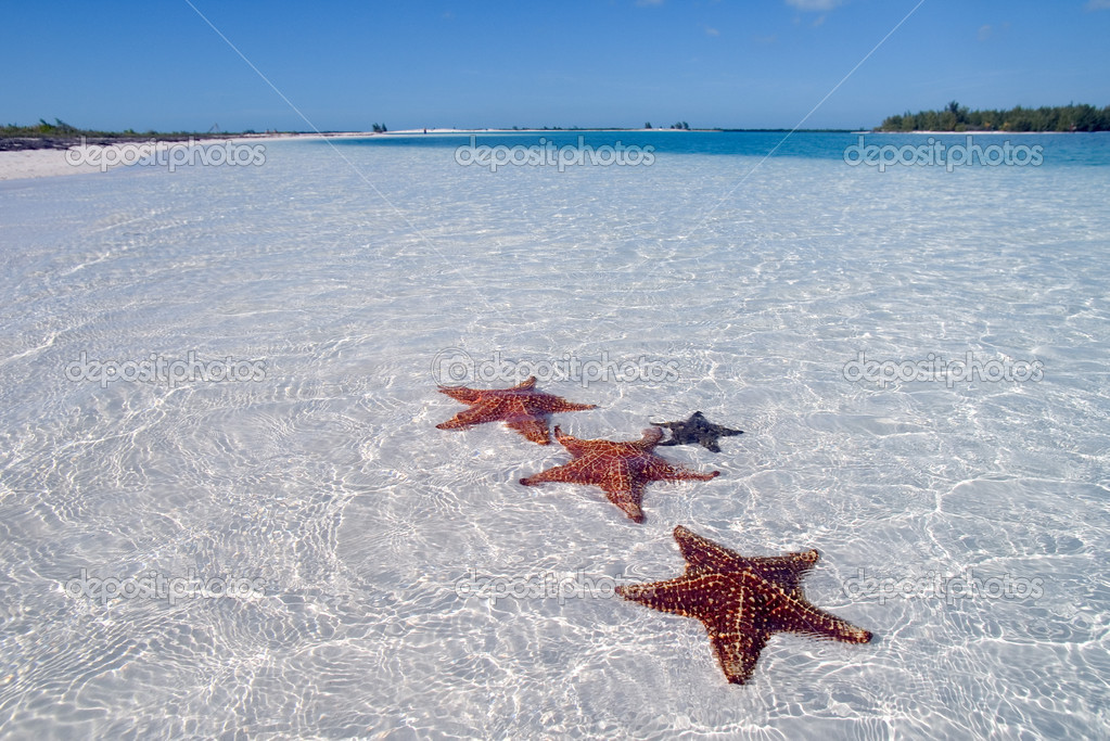 Sea star on the paradise beach