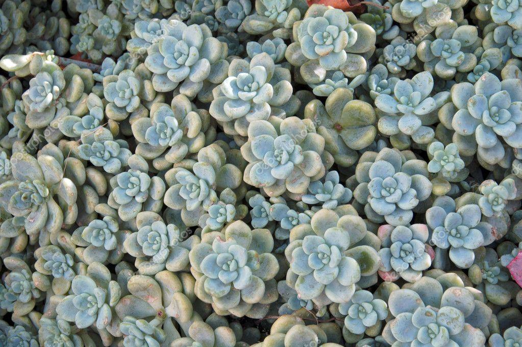 Succulent Plants Cluster