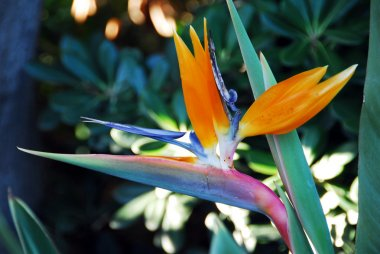 Flower Bird Of Paradise