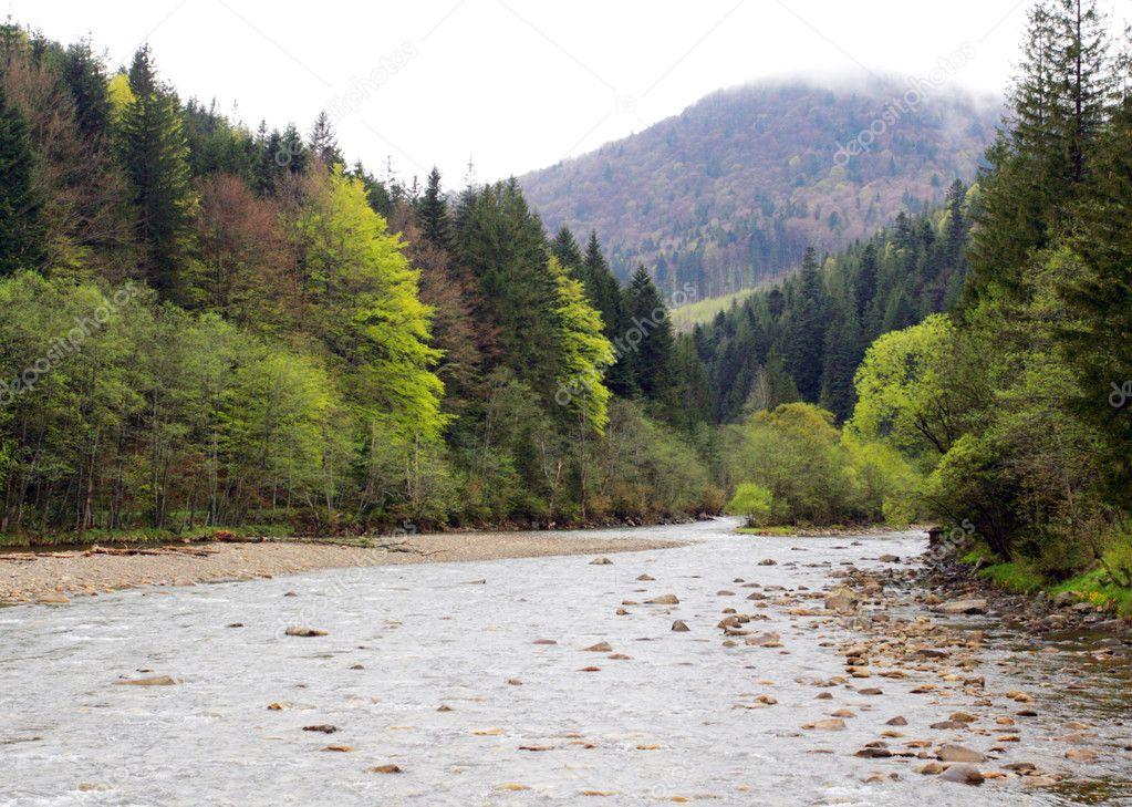 Mountain river in Carpathian mountains