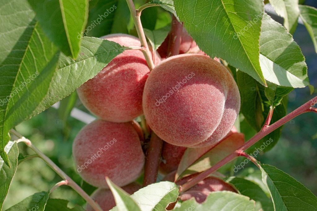 Peach 01