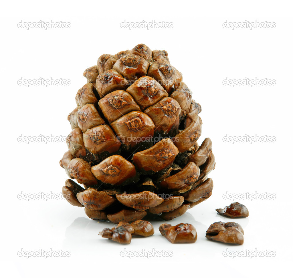 Cone and Nuts of Siberian Cedar Isolated