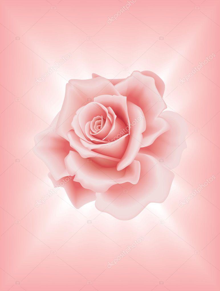 rosa #hashtag