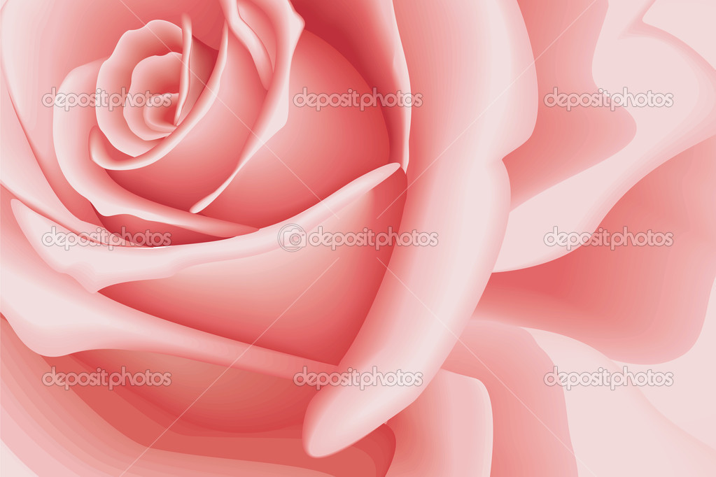 Background Rose
