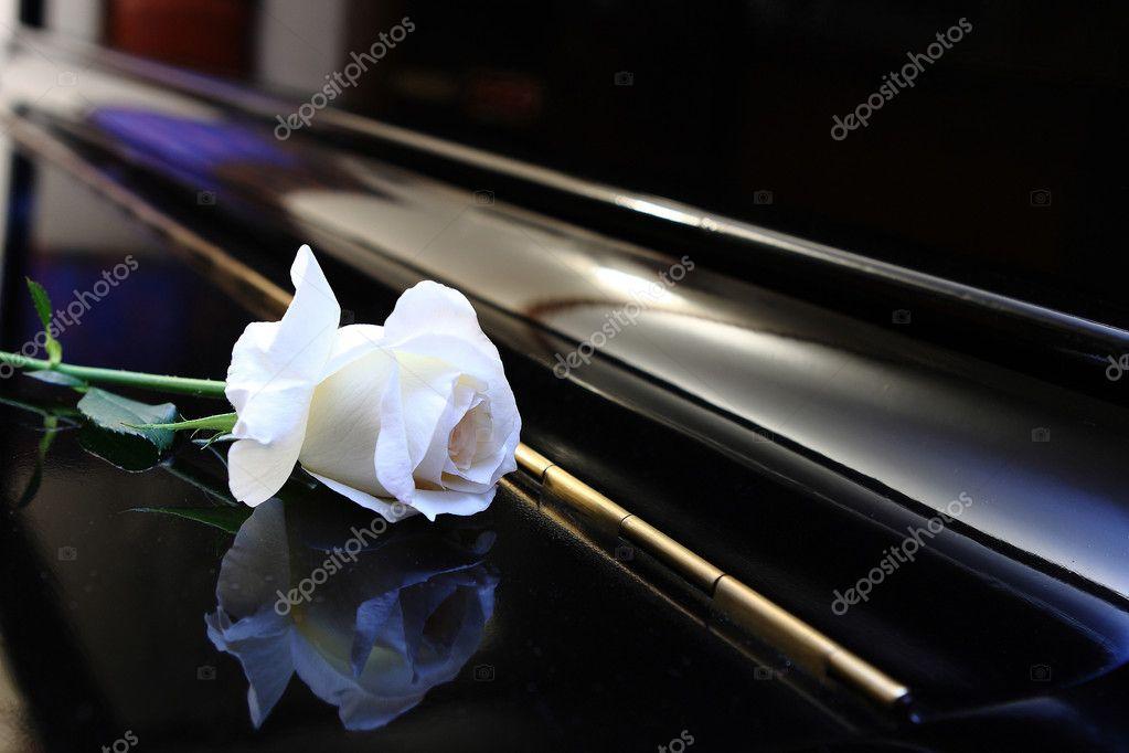 """Résultat de recherche d'images pour """"rose blanche sur piano blanc"""""""