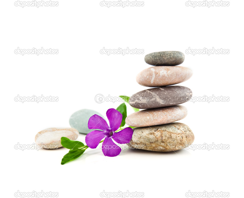 The balanced stones and gentle flower