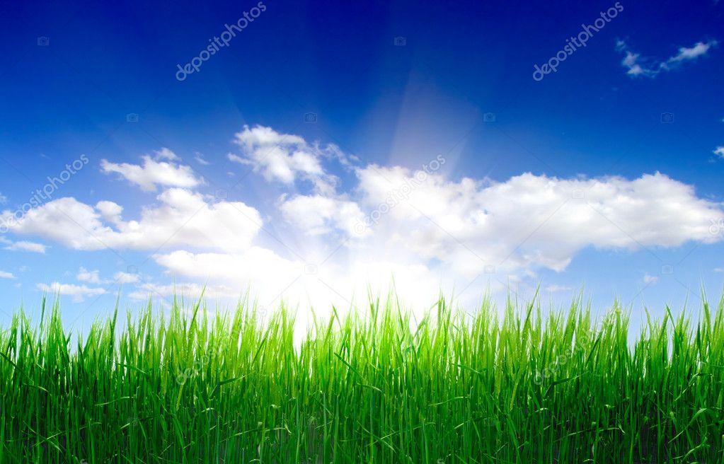 Фотообои Высокая трава и небо