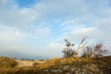 Snowy Curonian Spit dunes