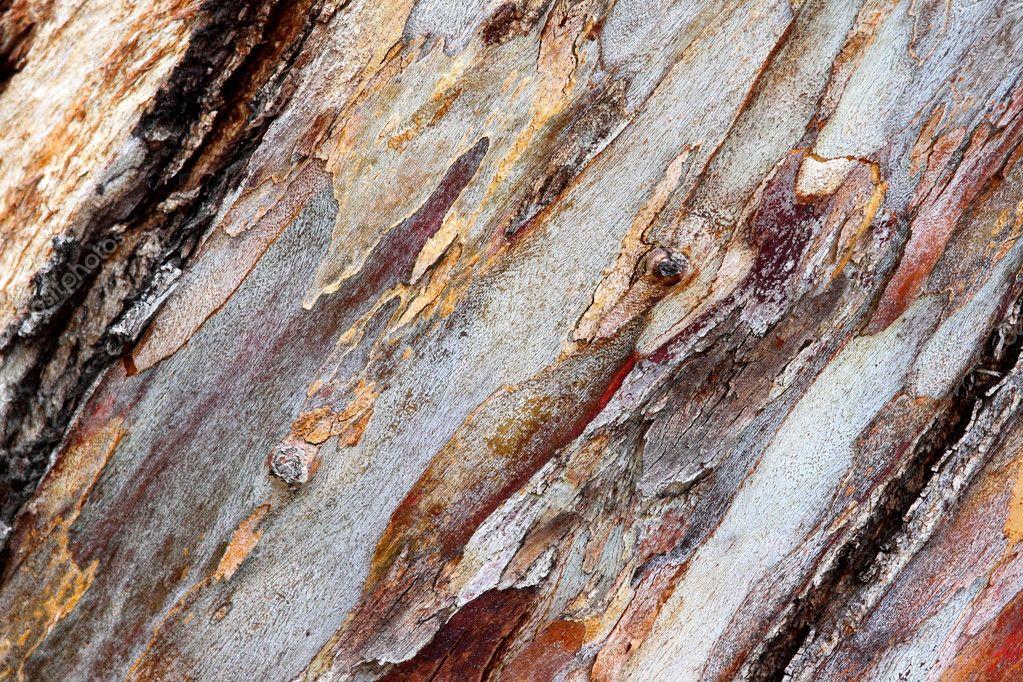 Bark eucalyptus