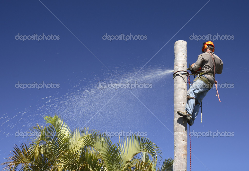 Tree lopping / Palm tree lopping