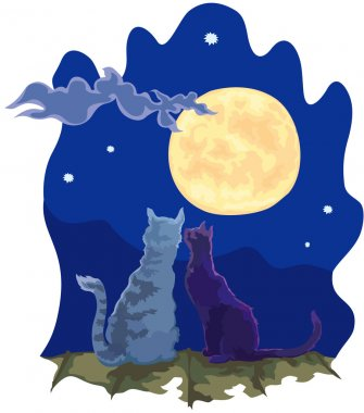 Cats couple in the night