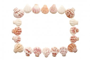 Sea shell frame isolated on a white background