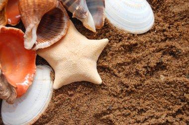 Starfish and seashells on golden sand