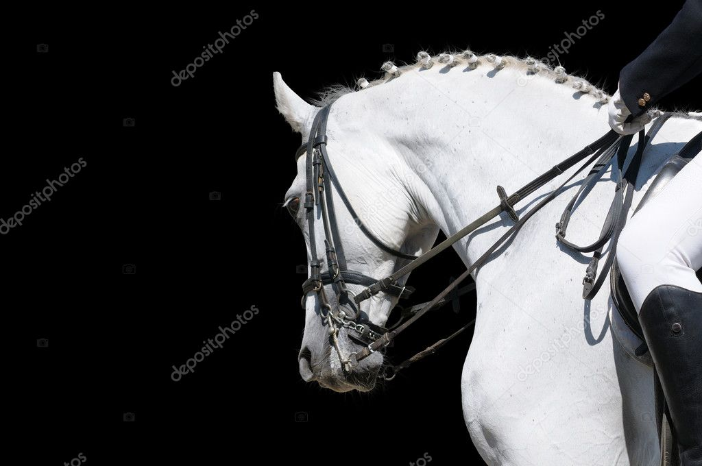 A portrait of gray dressage horse