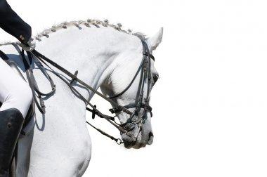 A portrait of dressage horse