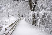 Fényképek a new england télen