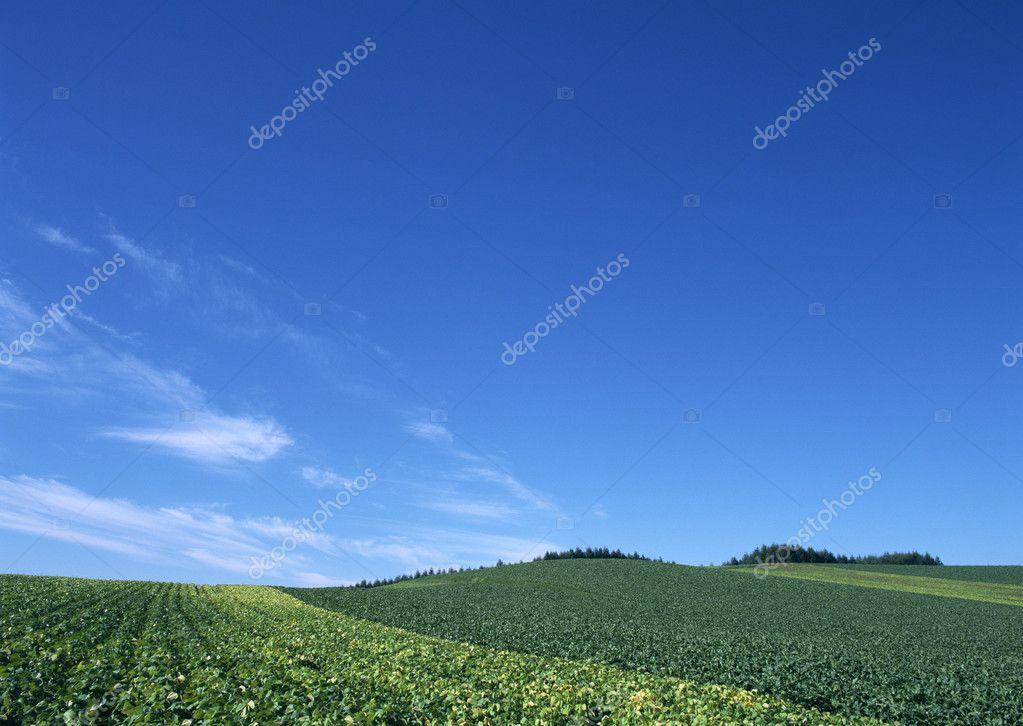 Beautiful landscape under blue sky