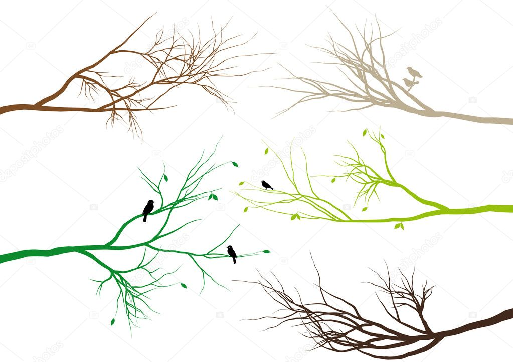 Tree branches, vector