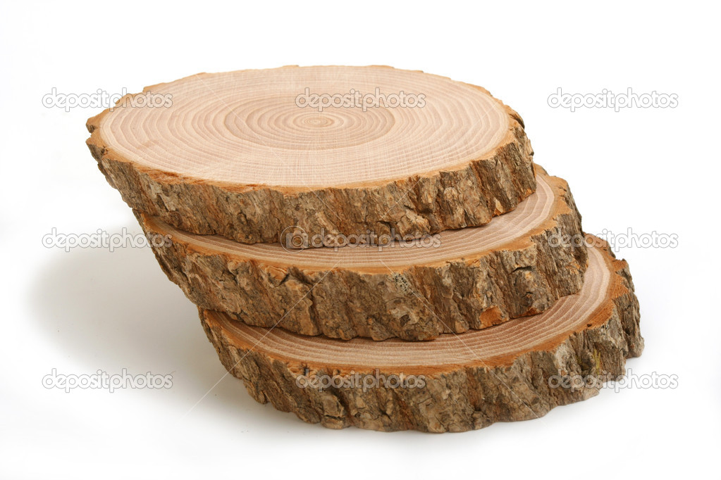 Cross sections of tree trunk
