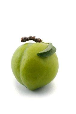 Green prun