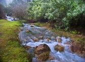 Parod fiume Israele