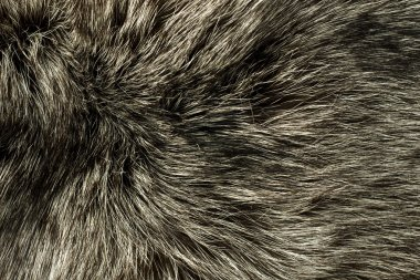 Closeup of polar Fox fur